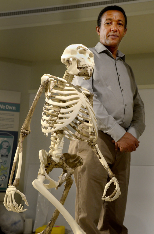 Description of . Jeff Forman/JForman@News-Herald.com Yohannes Haile-Selassie stands next to the newly sculpted skeletal reconstruction of
