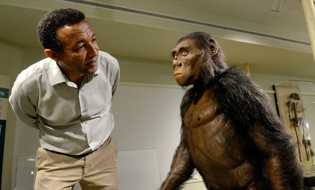Description of . Jeff Forman/JForman@News-Herald.com Yohannes Haile-Selassie, currator of physical anthropology at the Cleveland Museum of Natural History takes a close look at the lifelike sculpture of Lucy by paleoartist John Gurche.