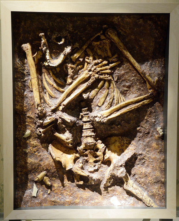 Description of . Jeff Forman/JForman@News-Herald.com A casting of a presumed Neandertal burial site from Israel. approximately 60,000 years old, is featured in the Human Origins Gallery
