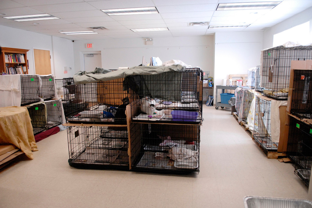 . Jeff Forman/JForman@News-Herald.com Cats recently seized from Robert Konst, of Bainbridge Township, are housed in temporary cages in the Rescue Village community room. The room is usually used for social and educational events.